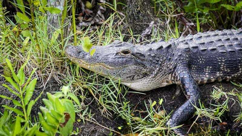 Best Things to Do in Miami - Everglades National Park