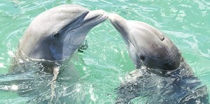 Meeting Dolphins in Cozumel