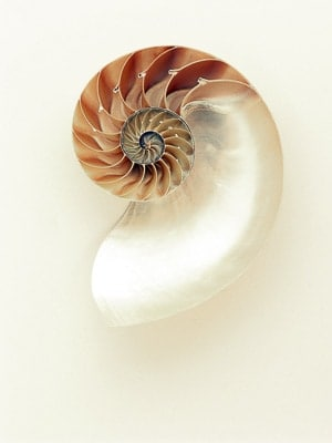 Beautiful Shell for Inspiration
