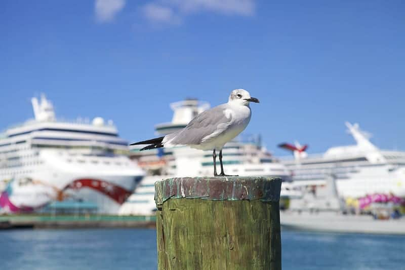 Seagull with two Ships at a port